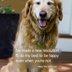 Happy Golden Retriever Photo and Quote
