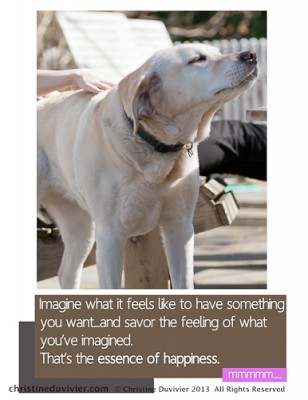Photo of yellow lab, nose up sniffing and savoring the air