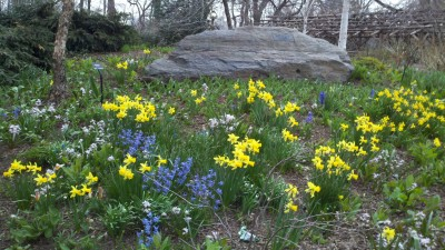 Solid Rock among early spring flowers and seedlings